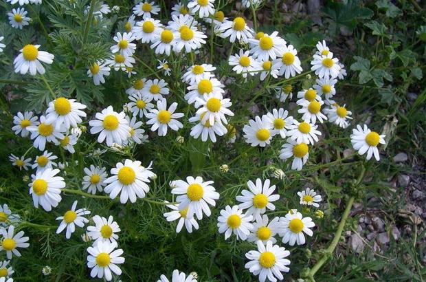 Хомеопатия с лайка