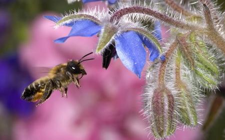 Лечение с пчелна отрова